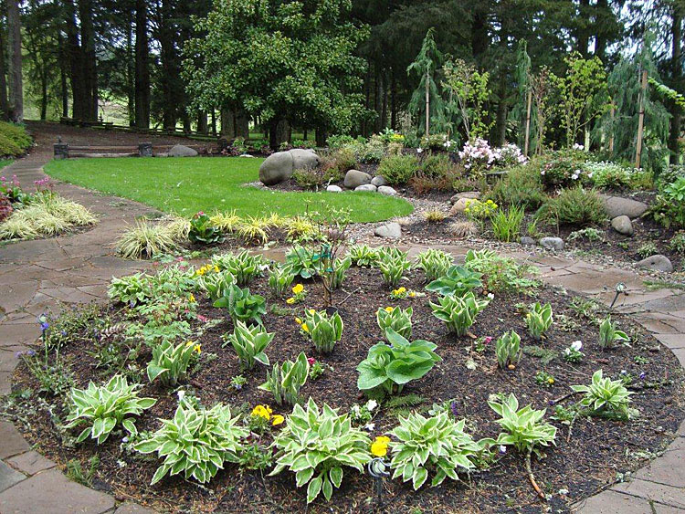 Tree shrubs and lawn installation for Low maintenance bushes and shrubs